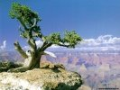 Grand Canyon Grand Canyon wallpaper