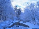Winter Winter Landscape wallpaper